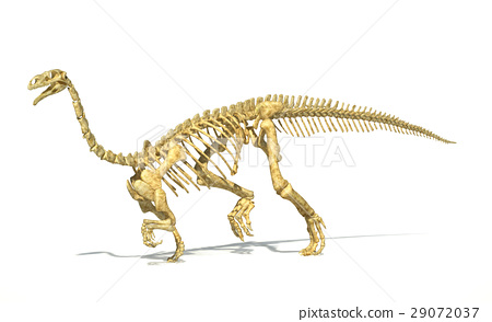 Plateosaurus dinosaur, full photo-realistic skeleton, scientifically correct. perspective view. 29072037