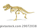 T-Rex dinosaur full skeleton, photo-realistic, scientifically correct. Perspective view on white background. 29072038