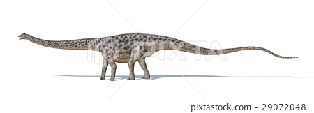 Photorealistic and scientifically correct 3 D rendering of a Diplodocus dinosaur. 29072048