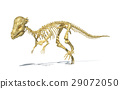 Pachycephalosaurus dinosaur, full photo-realistic skeleton, scientifically correct. perspective view. 29072050