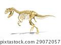 Allosaurus skeleton photo-realistic, scientifically correct. 29072057