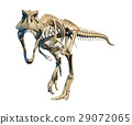 T-Rex photo-realistic full skeleton. Front view. 29072065