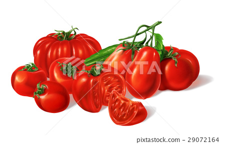 Composition of Different red Tomatoes types grouped. Airbrush illustration. 29072164
