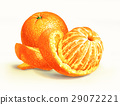 Two oranges isolated on a white surface, with one of them half peeled. 29072221