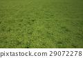 Grass meadow, bird eye view. 29072278