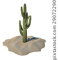 Cactus plant on sand, isolated. 29072290