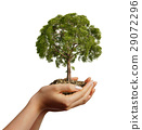 Woman's hands holding soil with a tree. 29072296