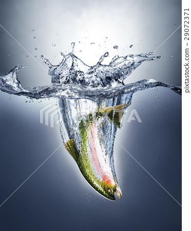 Salmon fish splashing into water forming a crown splash. 29072371