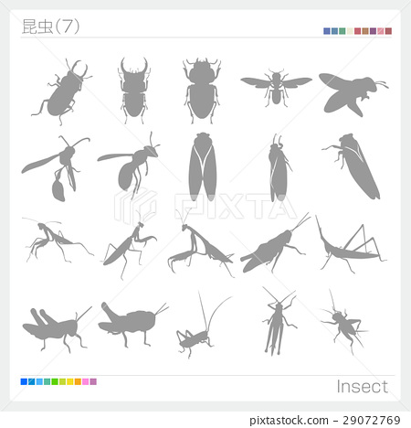bug, insect, insects 29072769
