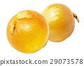 양파, 야채, 채소 29073578