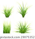 set vector realictic grass 29075352