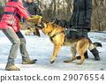 police, shepherd, dog 29076554