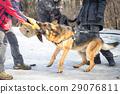 police, shepherd, snow 29076811
