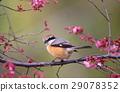 wild bird, bird, birds 29078352