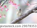wild bird, bird, birds 29078353