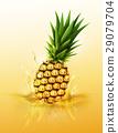 Ripe pineapple drop on juice splash and ripple 29079704