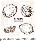 lemon drawn illustration 29080409