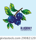 Digital vector detailed color blueberry hand drawn 29082120