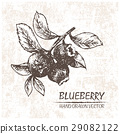 Digital vector detailed blueberry hand drawn 29082122