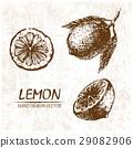 lemon drawn illustration 29082906