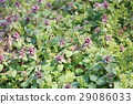 花朵 花卉 花 29086033