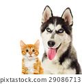 Kitten and puppy 29086713