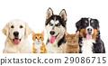Kitten and puppy 29086715