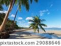 ยอดเยี่ยม,ชายหาด,สรวงสวรรค์ 29088646