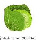 树叶 甘蓝 包菜 29088945