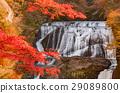 ต้นเมเปิล,ฤดูใบไม้ร่วง,น้ำตก 29089800