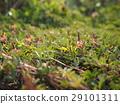 绿地 野花 草毯 草皮 草地 29101311