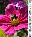 Bumble bee 29102946