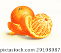 Two oranges isolated on a white surface, with one of them half peeled. 29108987