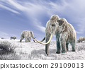 Two mammoth in a field covered of snow. 29109013