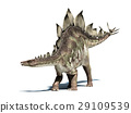Stegosaurus dinosaur. Isolated on white, with clipping path. 29109539