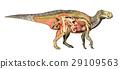 dinosaur, iguanodon, muscles 29109563