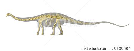 Diplodocus dinosaur silhouette, with full photo-realistic skeleton. 29109604