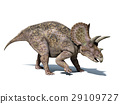 Triceratops dinosaur, isolated on white background, with clipping path.. 29109727