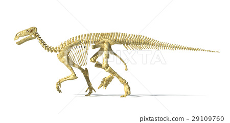 Iguanodon dinosaur full skeleton photo-realistic and scientifically correct, side view. 29109760