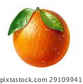 citrus, juicy, orange 29109941