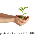 Man's hands holding soil with a little growing green plant. 29110486