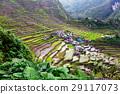 Rice terraces 29117073