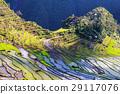 Rice terraces 29117076