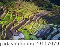Rice terraces 29117079