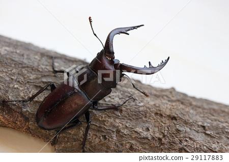 虫子 漏洞 昆虫 29117883