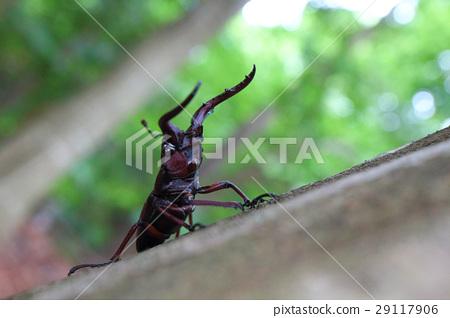 虫子 漏洞 昆虫 29117906