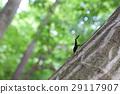 锯齿停在木头上 29117907