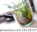 空气植物的玻璃容器放在窗口 29118147