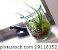 空中植物 植物 植物學 29118152