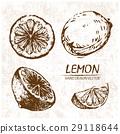 lemon hand drawn 29118644
